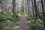 Der Waldwanderpfad