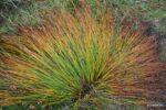 interessant gefärbtes Gras.