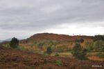 Die Highlands in der Nähe von Loch Ness. Bei manchen Bildern kann man unten auch sehen wo sie genau aufgenommen wurden wenn man auf Fotodetails klickt.