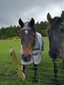 Hier tragen sogar die Pferde Regenmäntel.