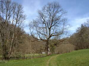 Knorriger Baum.