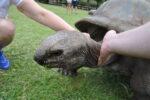 Schildkröte im Safaripark