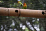 Vögel an Nistloch