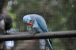 Vogel am fressen