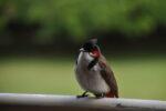 Vogel in Nahaufnahme