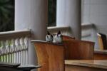 Vögel warten auf Krümel vom Essen