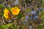 Blüte an Baum
