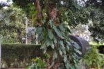 Pflanze an Baum