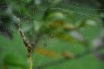 Kleine Spinnen im Netz