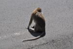 Affe auf der Strasse
