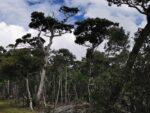 Bäume im Nationalpark