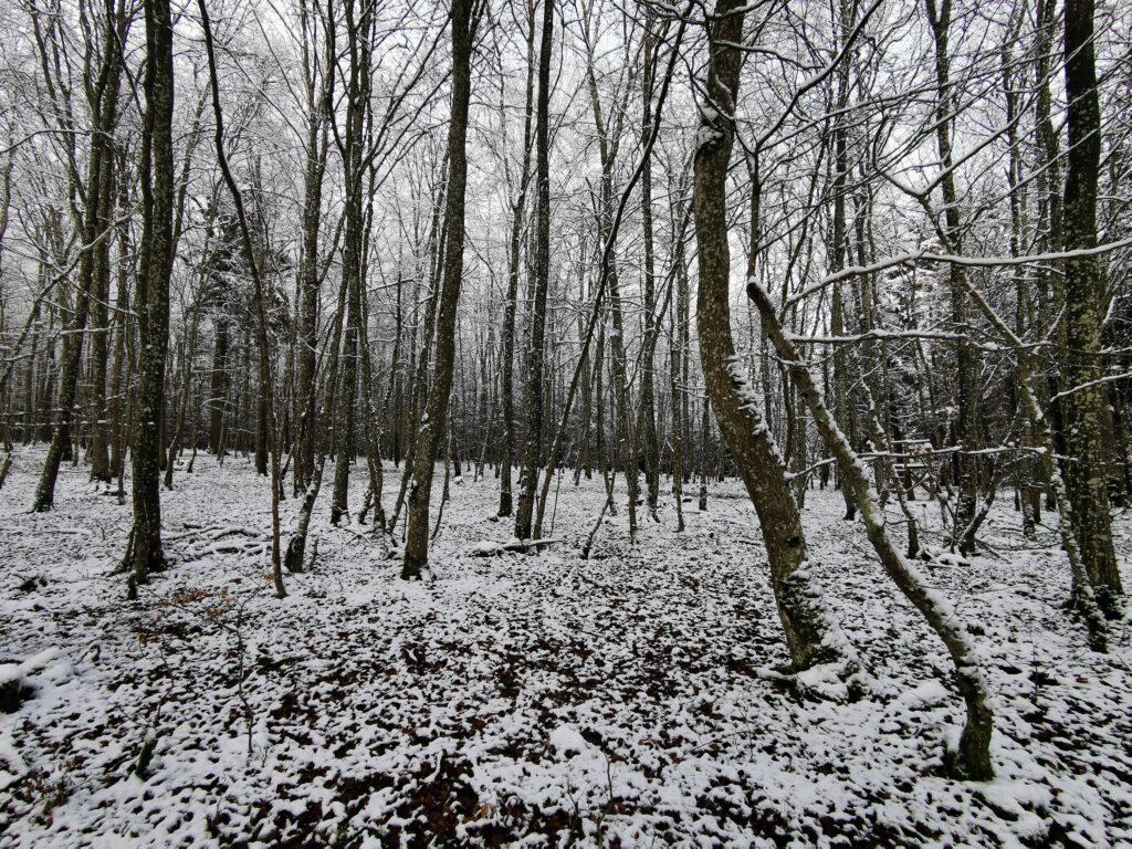 Schnee und Still im Wald... soweit man dies in einem Foto festhalten kann