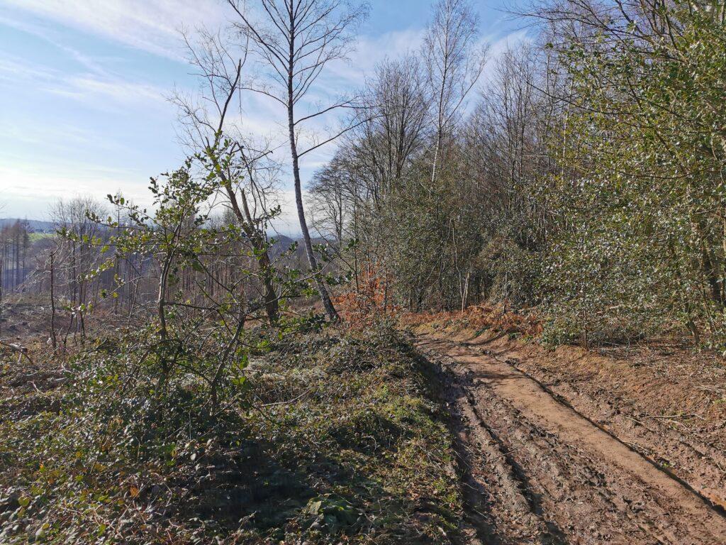 Waldschäden links und Waldweg in schlechtem Zustand