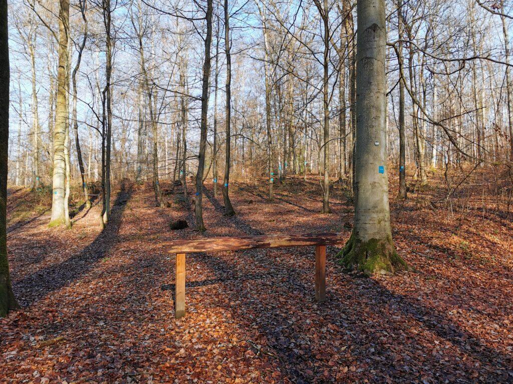 Ein Blick in den Trostwald in Odenthal