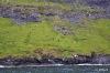 Schafe am steilen Hang