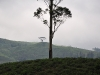 Berg und Baum